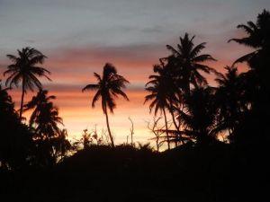 sunsetforest
